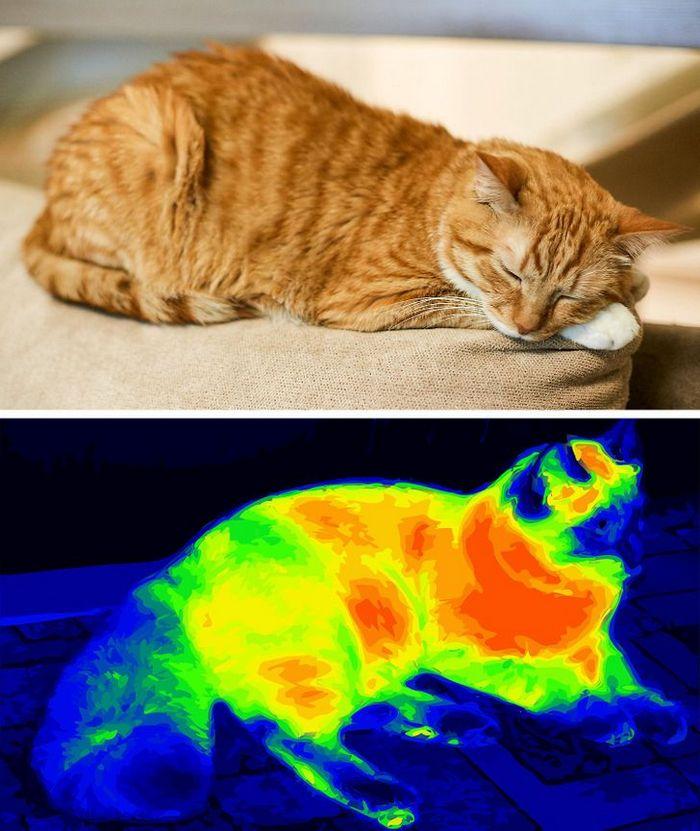 Por que a língua do gato é áspera? 5