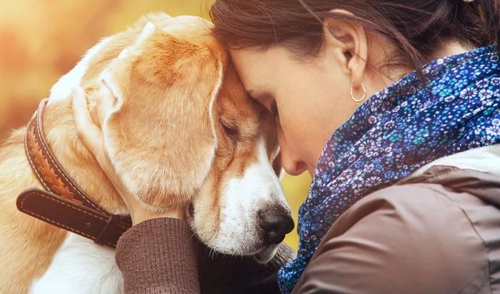 A ciência comprova que os cachorros conseguem entender emoções de seus donos 3
