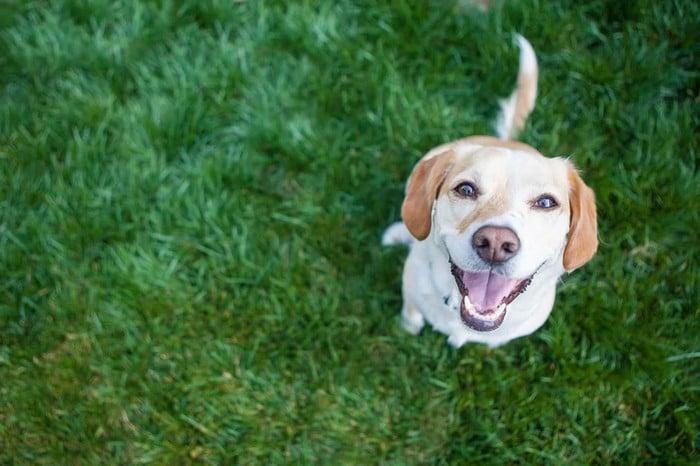 A ciência comprova que os cachorros conseguem entender emoções de seus donos 4