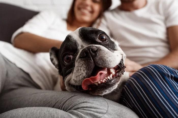 A ciência comprova que os cachorros conseguem entender emoções de seus donos 6
