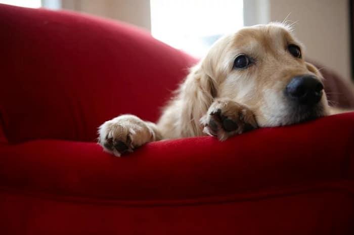 A ciência comprova que os cachorros conseguem entender emoções de seus donos 7