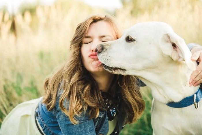 A ciência comprova que os cachorros conseguem entender emoções de seus donos 8