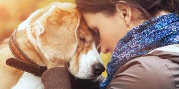 A ciência comprova que os cachorros conseguem entender emoções de seus donos 15
