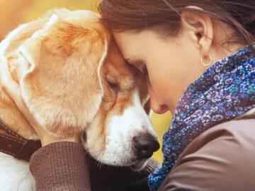 A ciência comprova que os cachorros conseguem entender emoções de seus donos 2