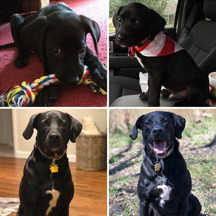 40 adoráveis cães antes e depois de crescer 4