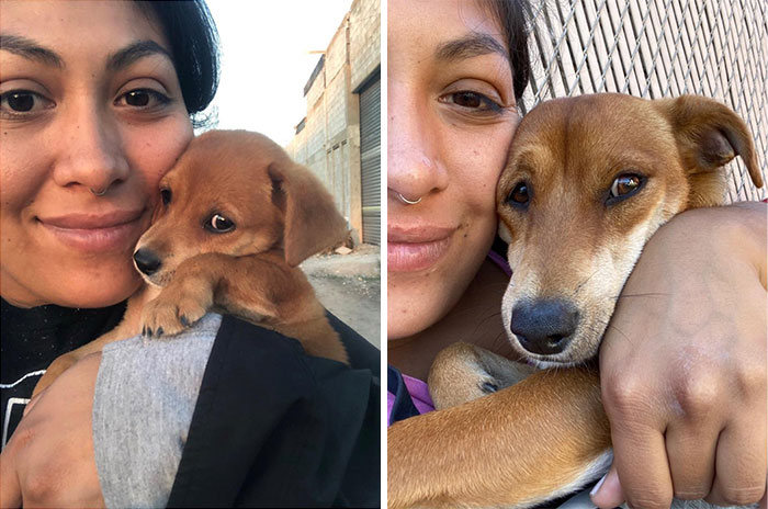 40 adoráveis cães antes e depois de crescer 9