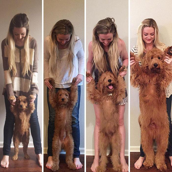 40 adoráveis cães antes e depois de crescer 11