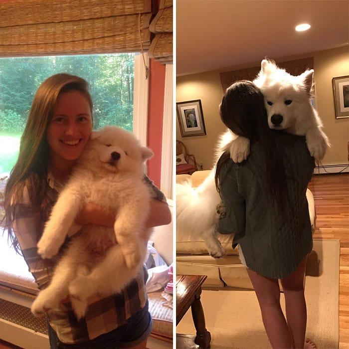 40 adoráveis cães antes e depois de crescer 13