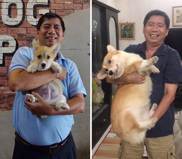 40 adoráveis cães antes e depois de crescer 17