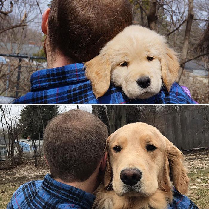 40 adoráveis cães antes e depois de crescer 21
