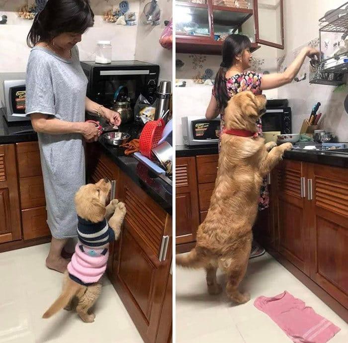 40 adoráveis cães antes e depois de crescer 26