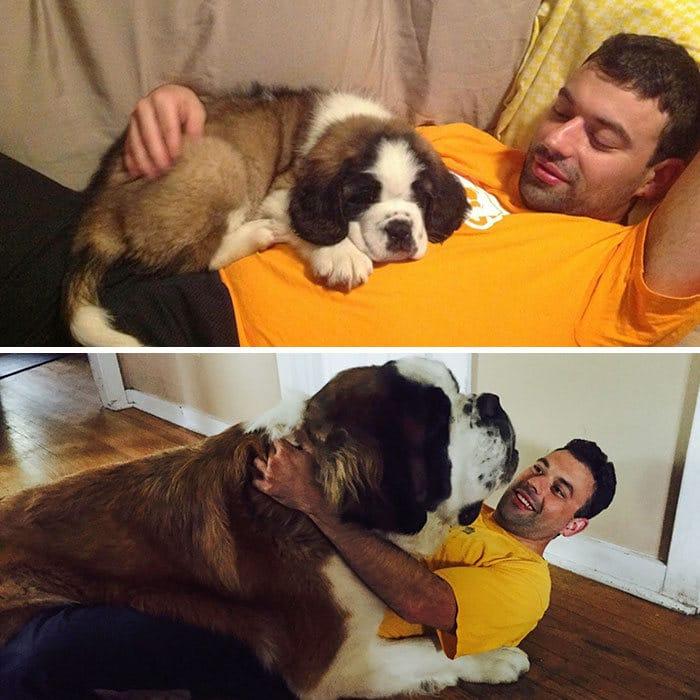 40 adoráveis cães antes e depois de crescer 29