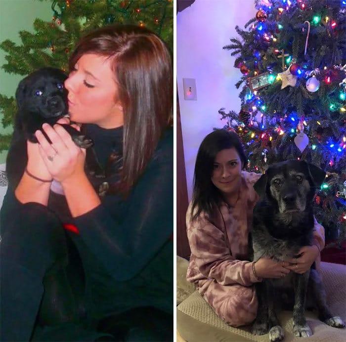 40 adoráveis cães antes e depois de crescer 35