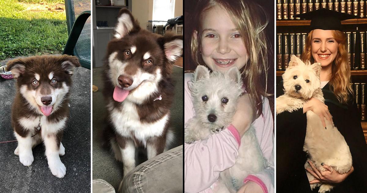 40 adoráveis cães antes e depois de crescer 44