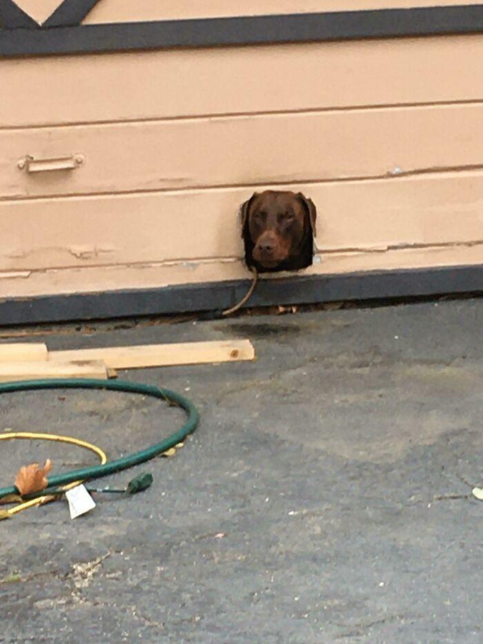 40 cães curiosos que observam tudo o que está acontecendo ao seu redor 3