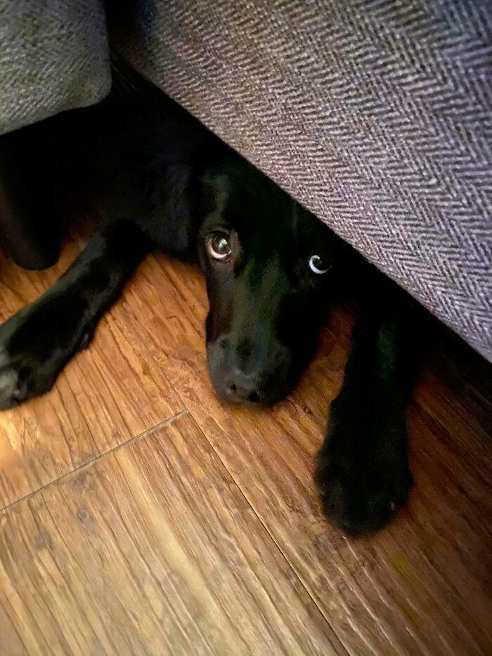 40 cães curiosos que observam tudo o que está acontecendo ao seu redor 8