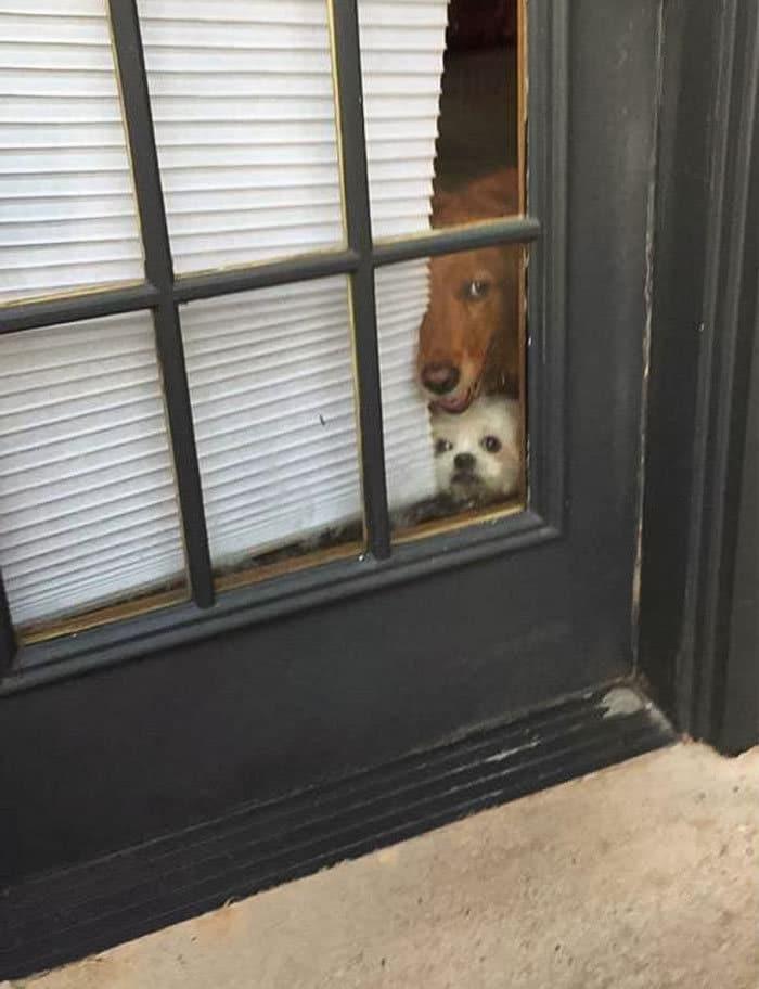 40 cães curiosos que observam tudo o que está acontecendo ao seu redor 24
