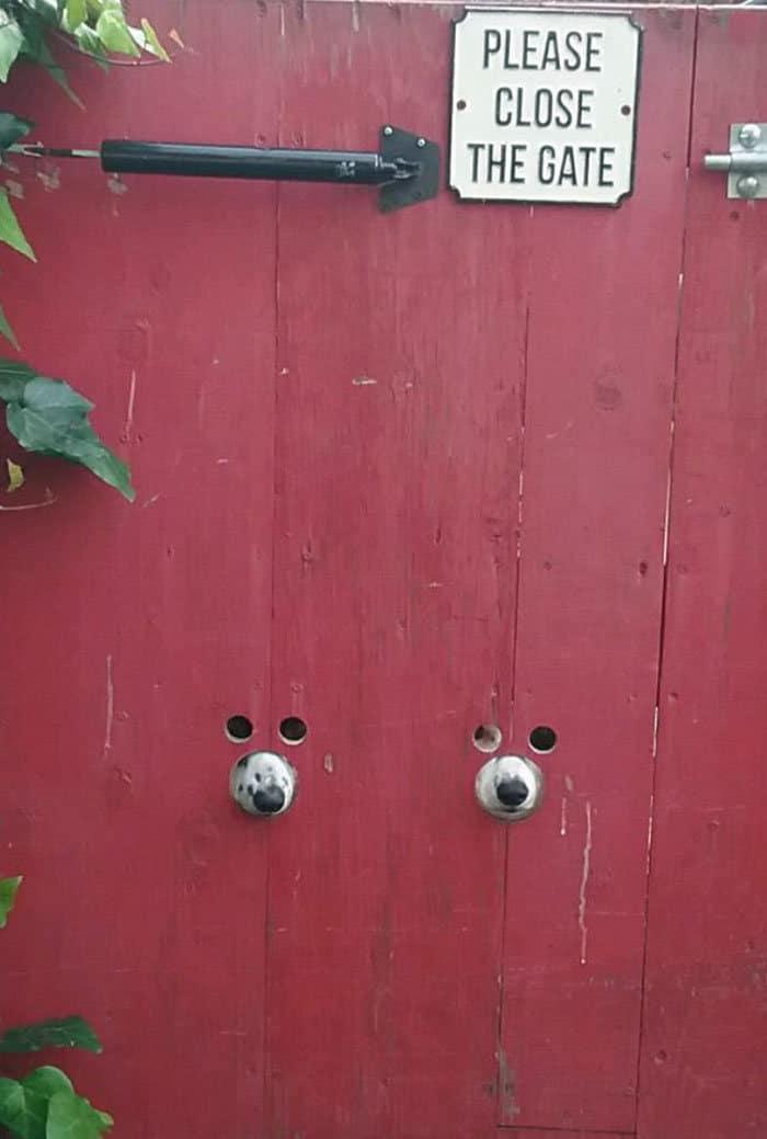 40 cães curiosos que observam tudo o que está acontecendo ao seu redor 32