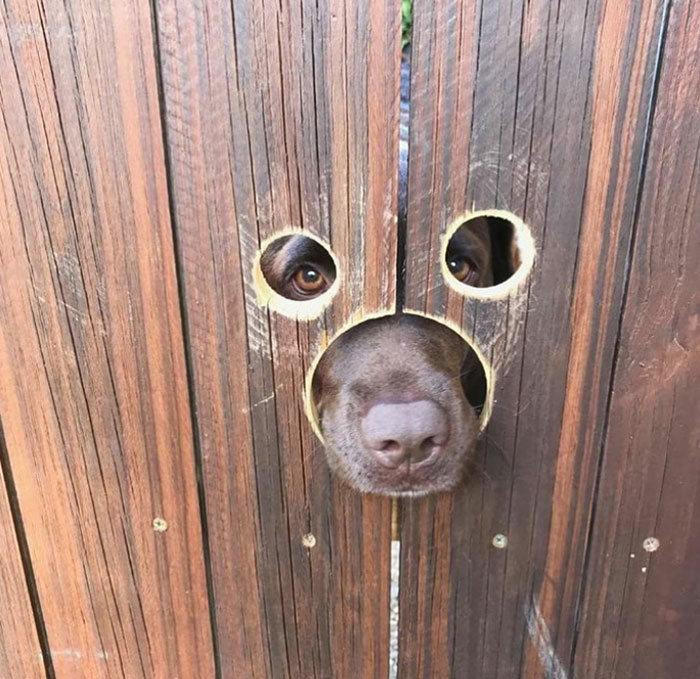 40 cães curiosos que observam tudo o que está acontecendo ao seu redor 36