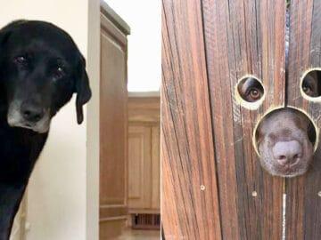 40 cães curiosos que observam tudo o que está acontecendo ao seu redor 26