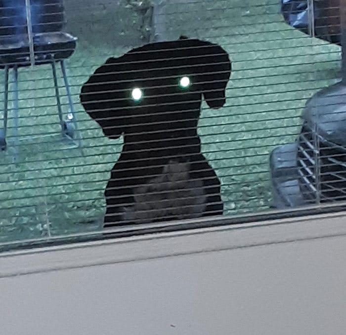 40 cães curiosos que observam tudo o que está acontecendo ao seu redor 39