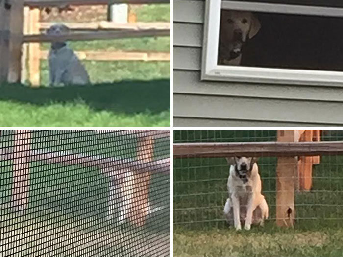 40 cães curiosos que observam tudo o que está acontecendo ao seu redor 40