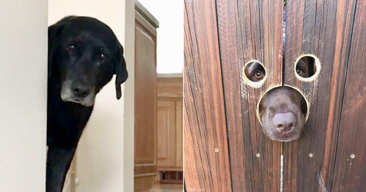 40 cães curiosos que observam tudo o que está acontecendo ao seu redor 2