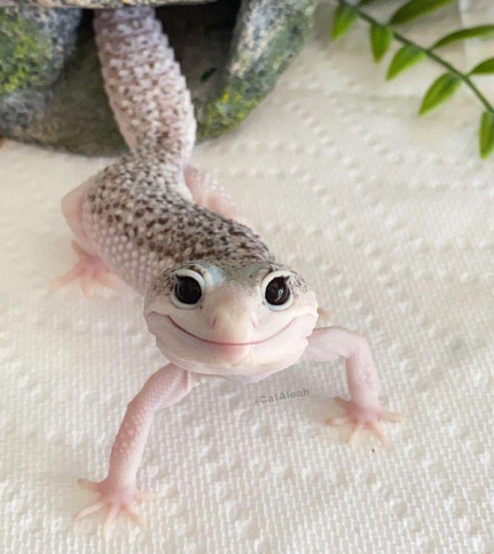 Enzo o lagarto celebridade da internet que sempre está sorrindo 2