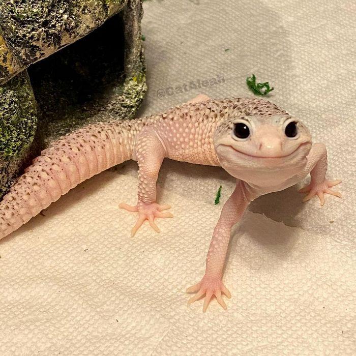 Enzo o lagarto celebridade da internet que sempre está sorrindo 3