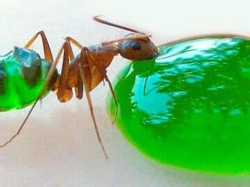 11 insetos saborosos que você pode comer 11