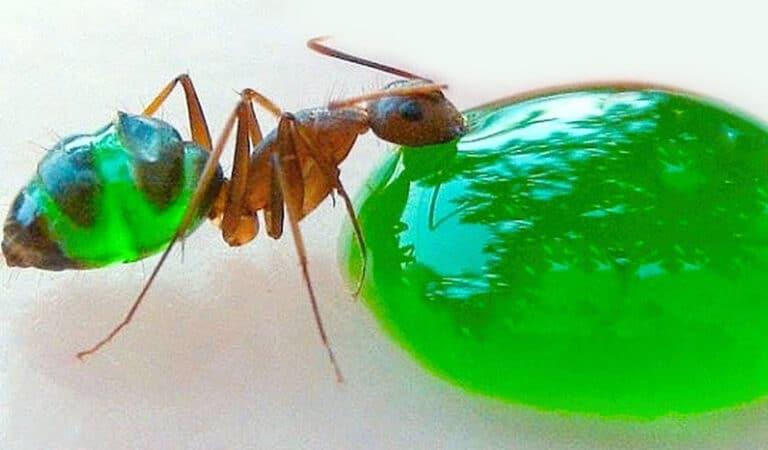 11 insetos saborosos que você pode comer 8