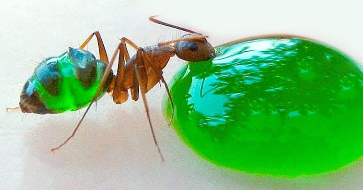 11 insetos saborosos que você pode comer 19