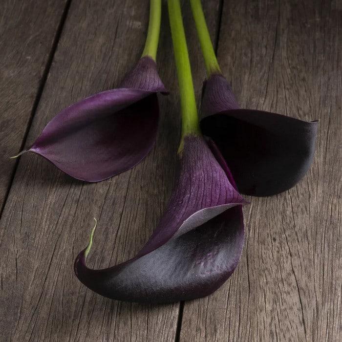 6 flores negras que são lindas e misteriosas 7