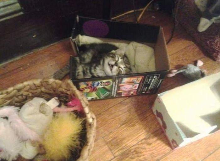 25 pessoas que adotaram um gato e ganharam na loteria da felicidade 6
