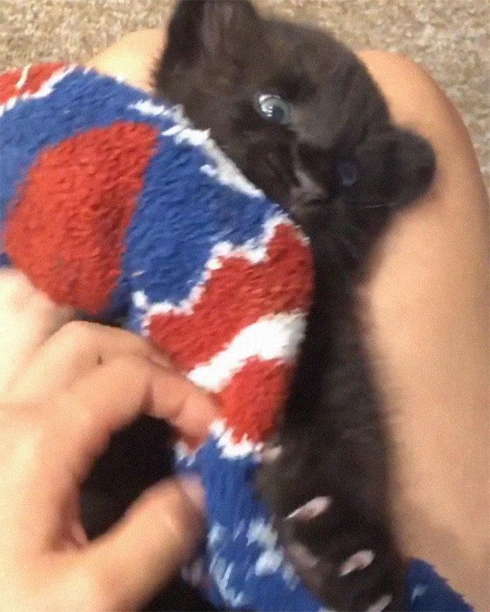 Pantera rejeitada pela mãe conquista internet ao lado do irmão Rottweiler 7