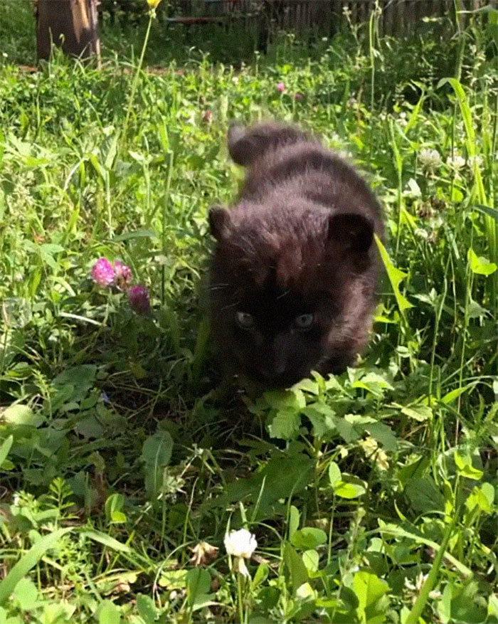 Pantera rejeitada pela mãe conquista internet ao lado do irmão Rottweiler 8