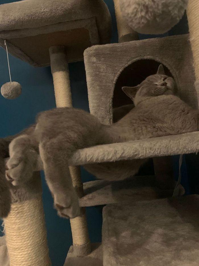 25 pessoas que adotaram um gato e ganharam na loteria da felicidade 8