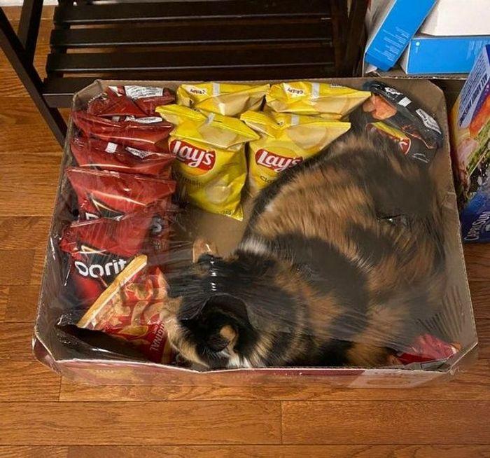22 coisas incomuns e engraçadas que os gatos fazem 9