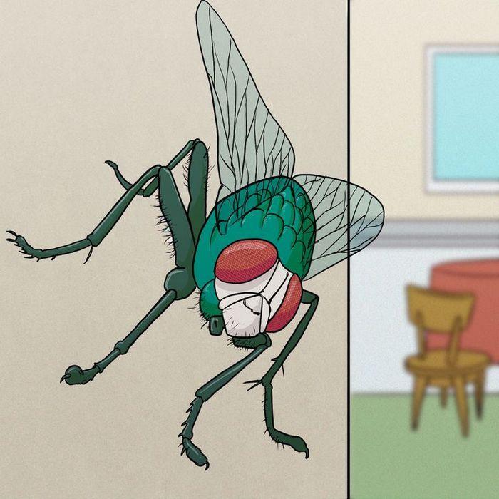 11 fatos sobre moscas que apostamos que você não sabia 10