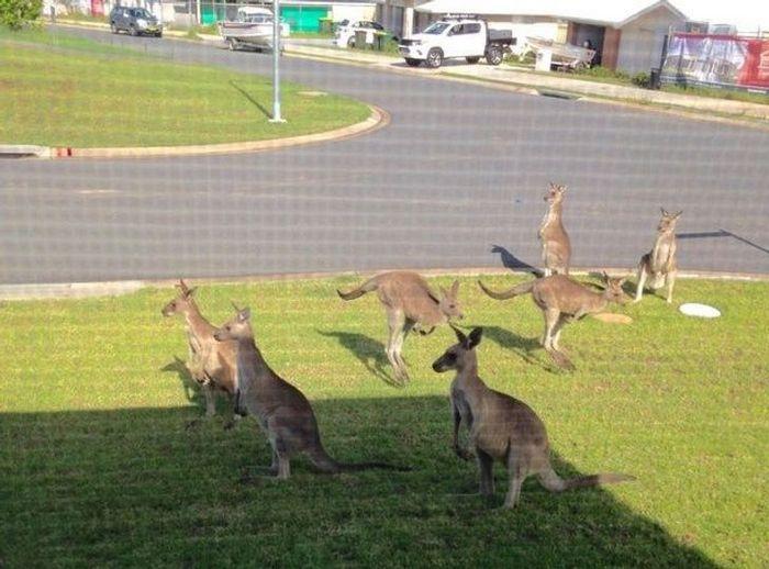 18 motivos que a Austrália é um país surpreendente 11