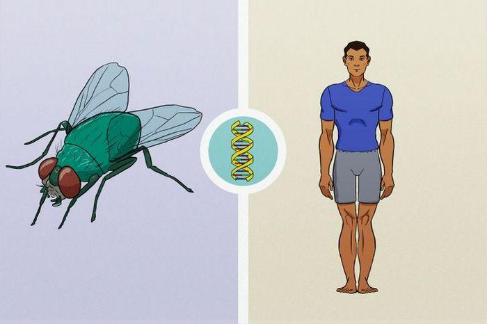 11 fatos sobre moscas que apostamos que você não sabia 11