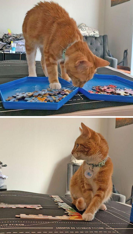 25 pessoas que adotaram um gato e ganharam na loteria da felicidade 19