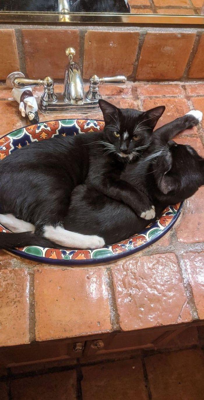 25 pessoas que adotaram um gato e ganharam na loteria da felicidade 24