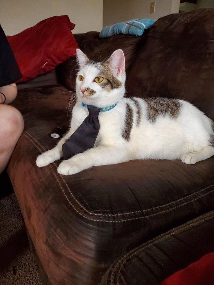 25 pessoas que adotaram um gato e ganharam na loteria da felicidade 25
