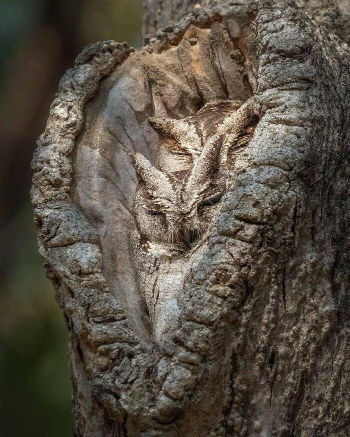 25 que escondem verdadeiros mestres da camuflagem acidental 25