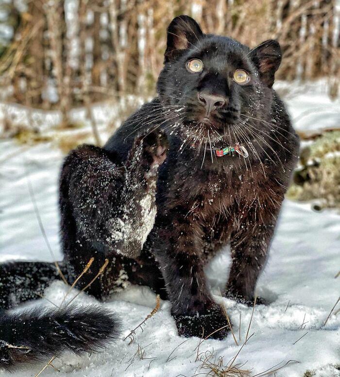 Pantera rejeitada pela mãe conquista internet ao lado do irmão Rottweiler 26