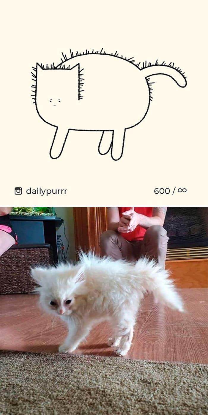 Aqui estão meus 40 novos desenhos de gatos bobos para fazer você rir 3