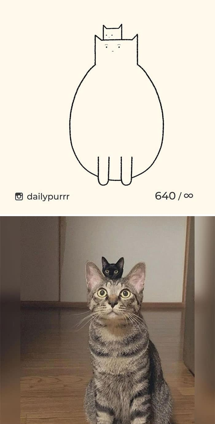 Aqui estão meus 40 novos desenhos de gatos bobos para fazer você rir 5
