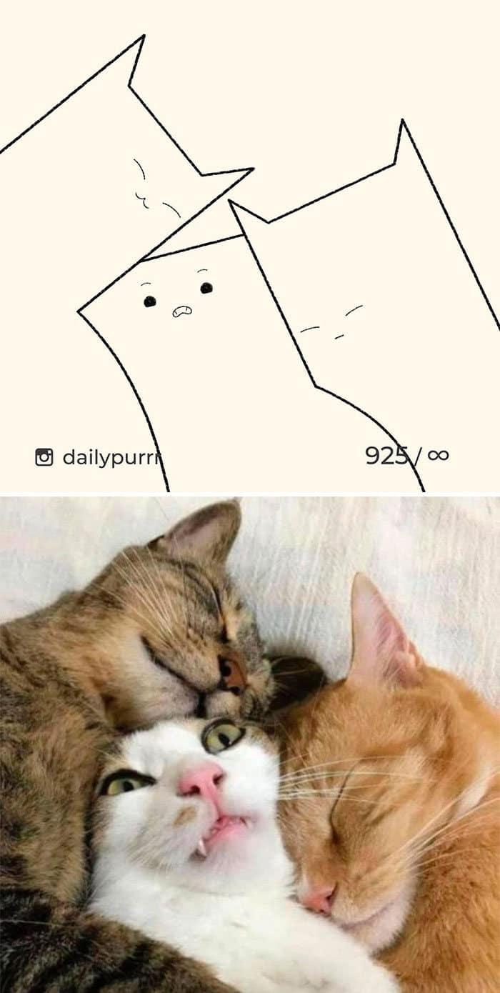 Aqui estão meus 40 novos desenhos de gatos bobos para fazer você rir 23