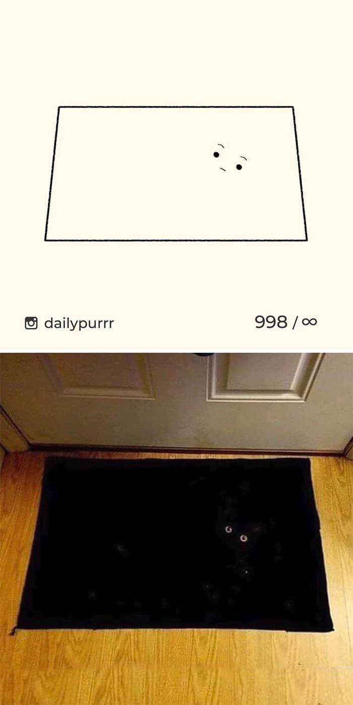 Aqui estão meus 40 novos desenhos de gatos bobos para fazer você rir 30